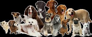 Verschillende hondenrassen bij elkaar